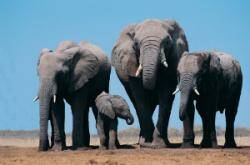 Hadoop elephants